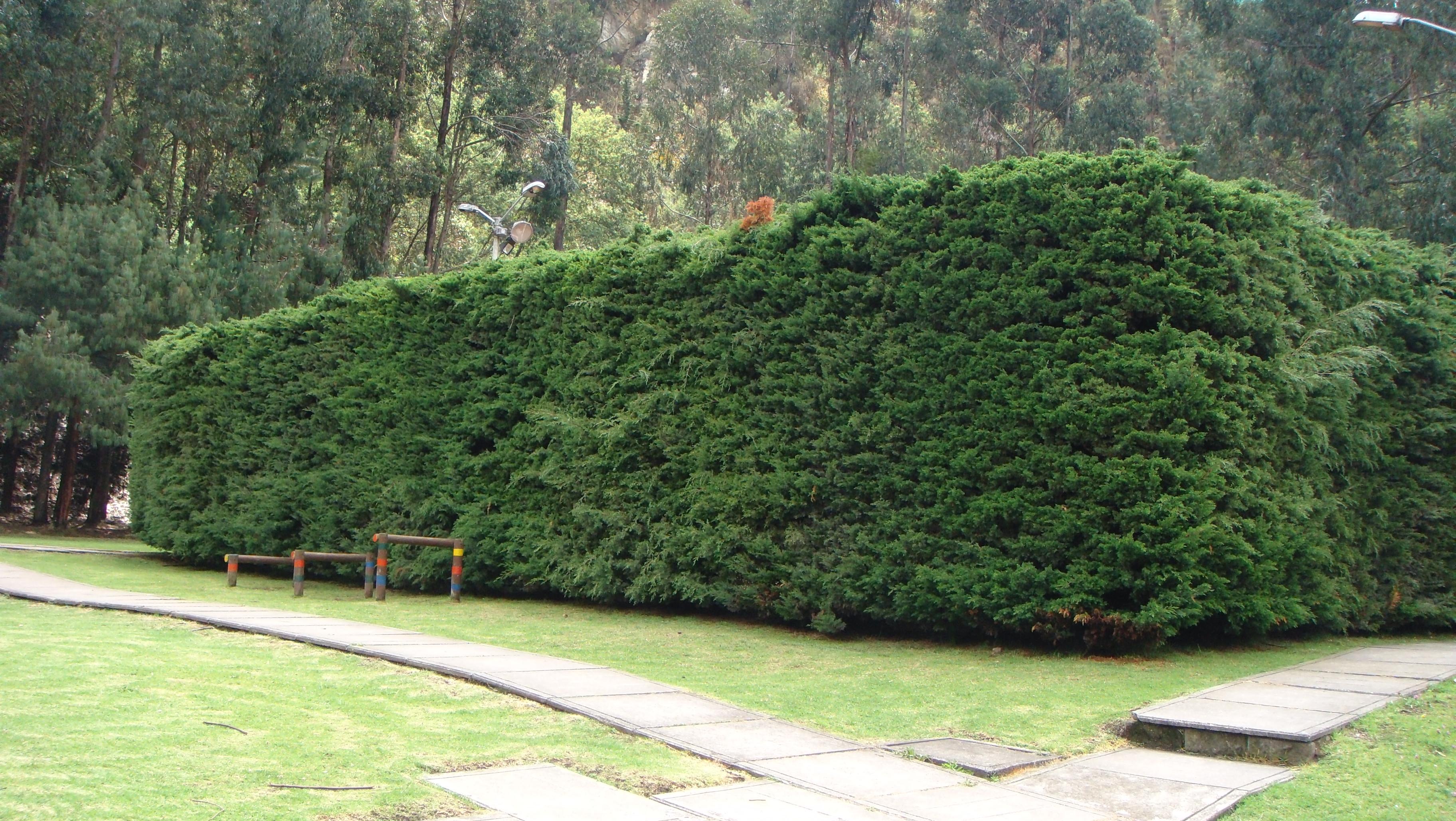 Cercas de madera related keywords cercas de madera long - Madera de pino ...