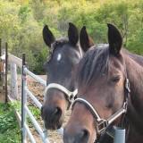 aceite caballos