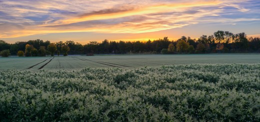 Sunrise on Fields