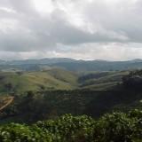 biodiversidad café