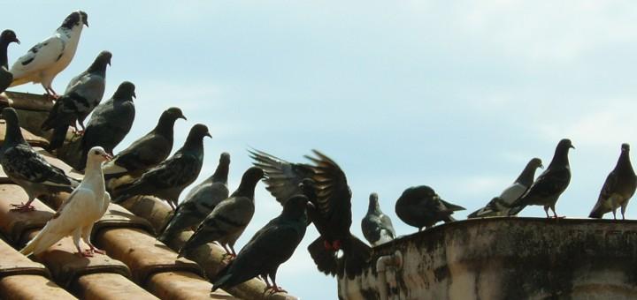 control de aves1