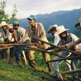 campesinos colombianos