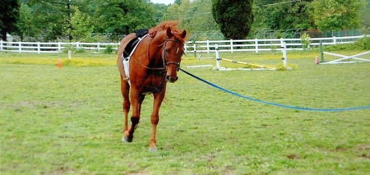 caballo doma