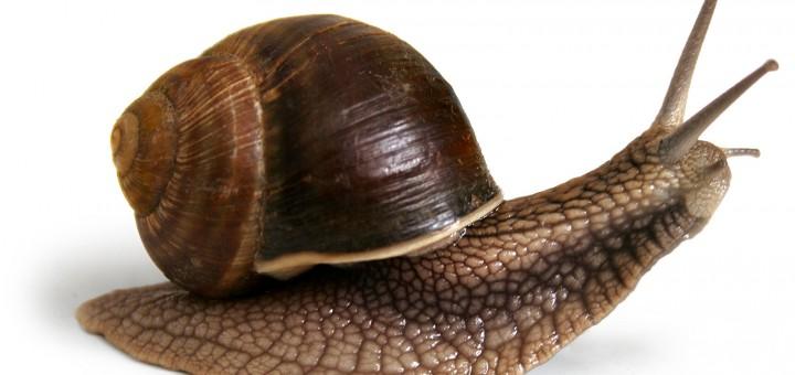 Cr a de caracoles es un buen un negocio abc del finkero for Caracoles de jardin