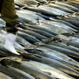 pesqueria