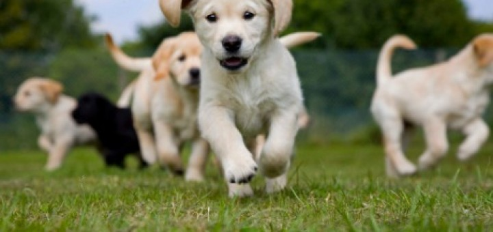 running-puppies