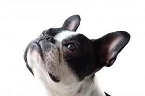 dog-4465690_1920