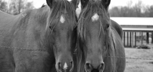 nutrición de equinos