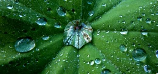 pluviómetro