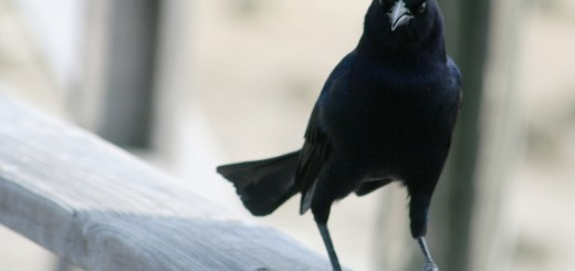 control de aves2