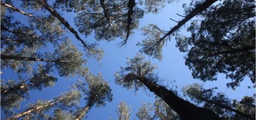terminos forestales1