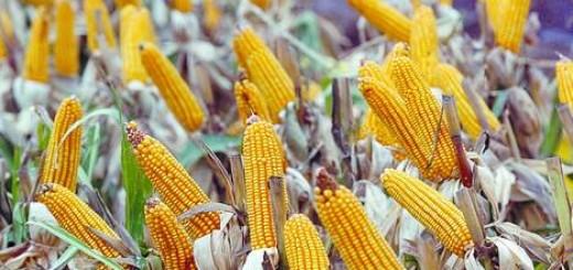 Refugio-Monsanto-Arriba-Beling-Latinoamerica_CLAIMA20140426_0001_17