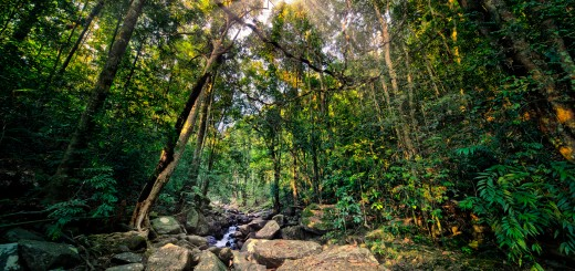 Sunburst in deep dark Jungle