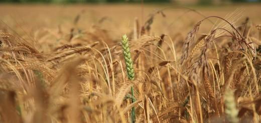 seguros en cultivos
