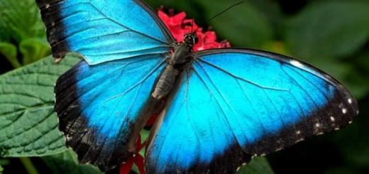Mariposa. Foto de Alas de Colombia.